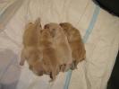 puppies_10