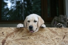 puppies_4