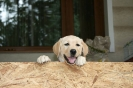 puppies_5