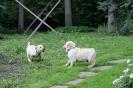 puppies_9